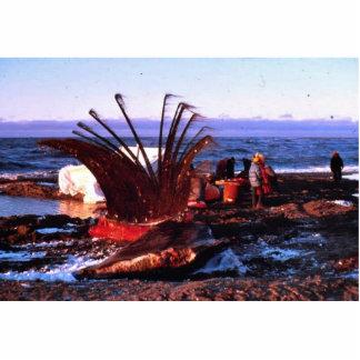 Asesino de la ballena escultura fotografica