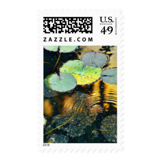 Ash On The Reflecting Pool In Balboa Park From The Stamps