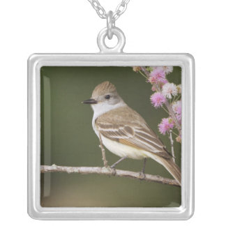 Ash-throated Flycatcher, Myiarchus Square Pendant Necklace