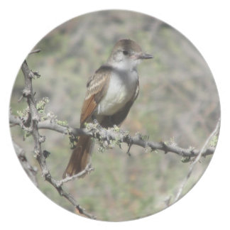 Ash-throated Flycatcher Plate