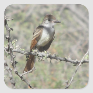 Ash-throated Flycatcher Square Sticker