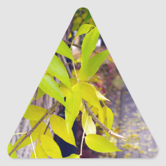 Ash with yellow leaves and pavement tiles triangle sticker
