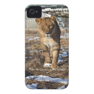 Asha - leona - caso del iPhone 4/4S iPhone 4 Protectores