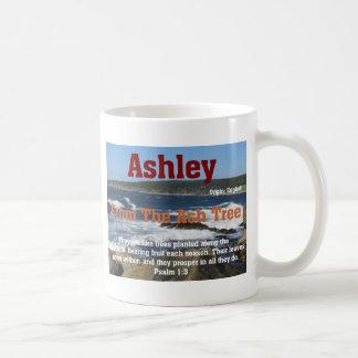Ashley Taza