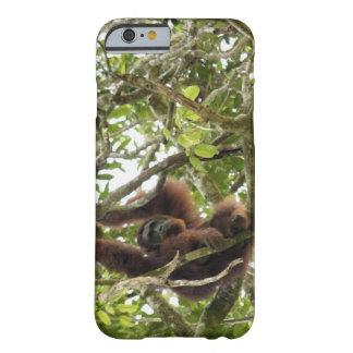 Asia, Borneo, Malaysia, Sarawak, Orangutan Barely There iPhone 6 Case