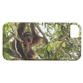 Asia, Borneo, Malaysia, Sarawak, Orangutan iPhone SE/5/5s Case