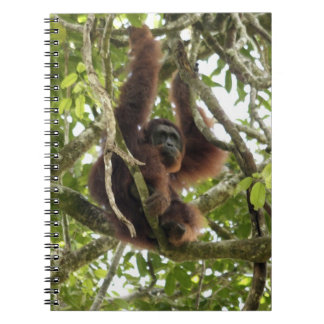 Asia, Borneo, Malaysia, Sarawak, Orangutan Notebook
