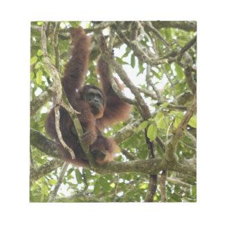 Asia, Borneo, Malaysia, Sarawak, Orangutan Notepad