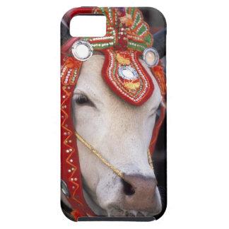 Asia, Burma (Myanmar) Shinbyu ceremony. Bull iPhone 5 Cover