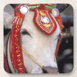 Asia, Burma (Myanmar) Shinbyu ceremony. Bull Drink Coaster