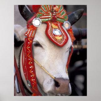 Asia, Burma (Myanmar) Shinbyu ceremony. Bull Poster