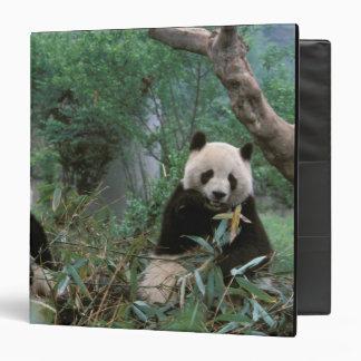 Asia, China, Chengdu. Giant Panda Sanctuary - 2 3 Ring Binder