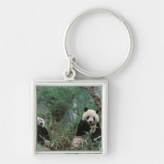 Asia, China, Chengdu. Giant Panda Sanctuary - 2 Silver-Colored Square Keychain