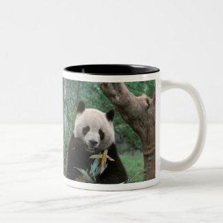 Asia, China, Chengdu. Giant Panda Sanctuary - 2 Two-Tone Coffee Mug