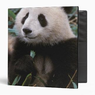 Asia, China, Chengdu. Giant Panda Sanctuary - Binder