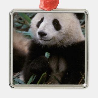 Asia, China, Chengdu. Giant Panda Sanctuary - Metal Ornament