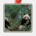 Asia, China, Chengdu. Santuario de la panda Adorno Navideño Cuadrado De Metal