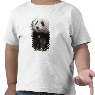 Asia, China, Chengdu. Santuario de la panda Camiseta