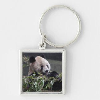 Asia, China Chongqing. Giant Panda at the 2 Keychain