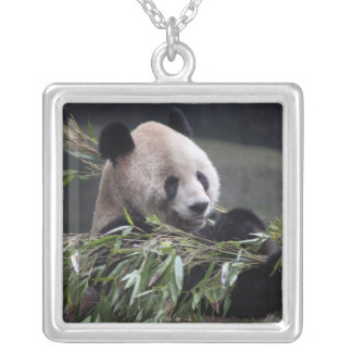 Asia, China Chongqing. Giant Panda at the 2 Silver Plated Necklace