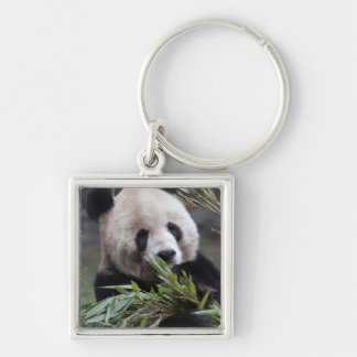 Asia, China Chongqing. Giant Panda at the Silver-Colored Square Keychain
