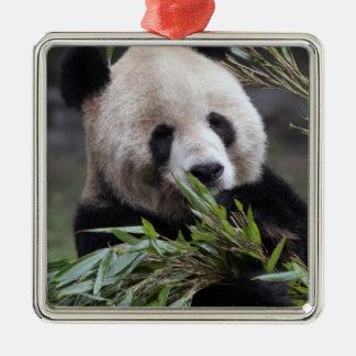 Asia, China Chongqing. Giant Panda at the Metal Ornament