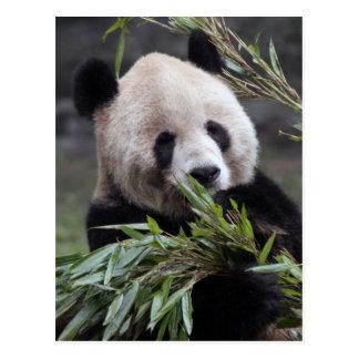 Asia, China Chongqing. Giant Panda at the Postcard