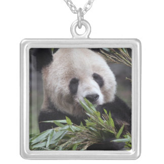 Asia, China Chongqing. Giant Panda at the Square Pendant Necklace
