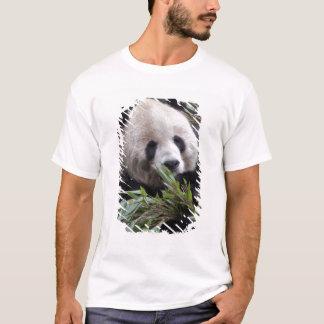 Asia, China Chongqing. Giant Panda at the T-Shirt