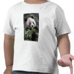 Asia, China Chongqing. Giant Panda at the Tshirts