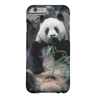 Asia, China, Chundu, Giant panda Barely There iPhone 6 Case