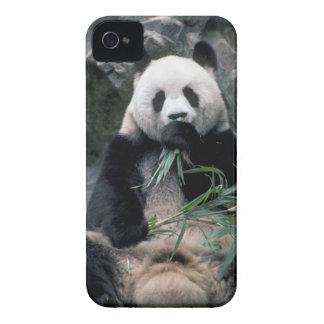 Asia, China, Chundu, Giant panda iPhone 4 Cover
