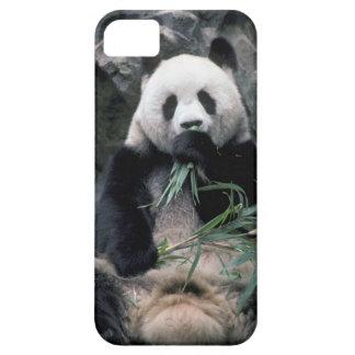 Asia, China, Chundu, Giant panda iPhone SE/5/5s Case