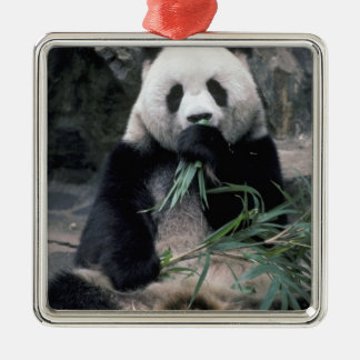 Asia, China, Chundu, Giant panda Metal Ornament