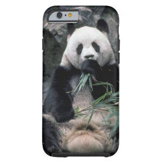 Asia, China, Chundu, Giant panda Tough iPhone 6 Case