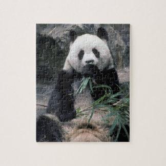 Asia, China, Chundu, panda gigante Puzzles