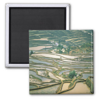 Asia, China. Flooded rice terraces near Nano 2 Inch Square Magnet