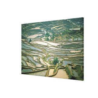 Asia China Flooded rice terraces near Nano Gallery Wrap Canvas