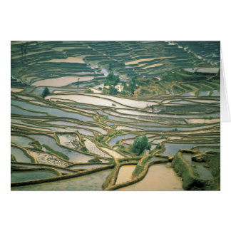 Asia, China. Flooded rice terraces near Nano Card