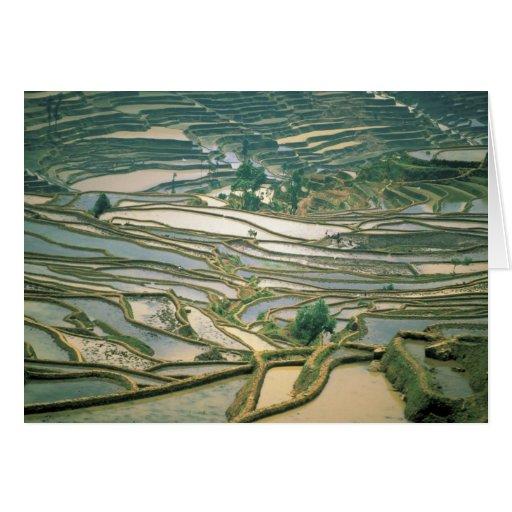 Asia, China. Flooded rice terraces near Nano Card