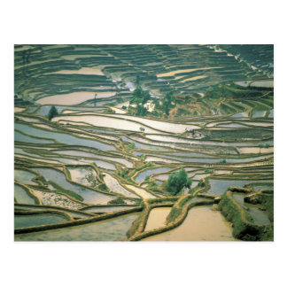 Asia, China. Flooded rice terraces near Nano Postcard