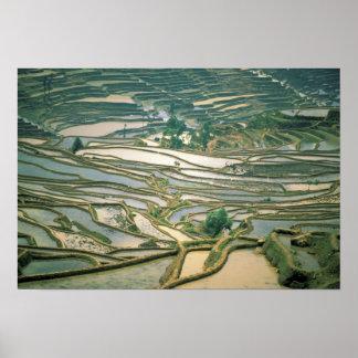 Asia China Flooded rice terraces near Nano Poster