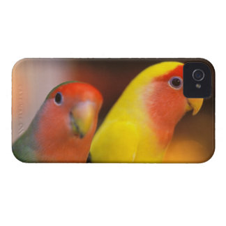 Asia, China, Hong Kong. Yuen Po Street bird Case-Mate iPhone 4 Case