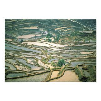 Asia, China. Las terrazas inundadas del arroz acer Fotografía