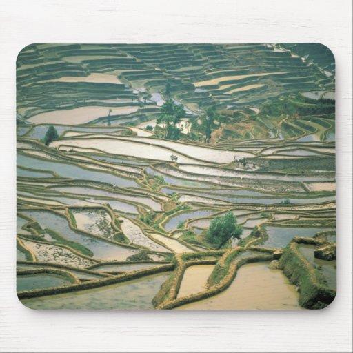 Asia, China. Las terrazas inundadas del arroz acer Tapetes De Raton