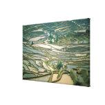 Asia, China. Las terrazas inundadas del arroz Lona Envuelta Para Galerías