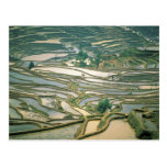 Asia, China. Las terrazas inundadas del arroz Tarjetas Postales