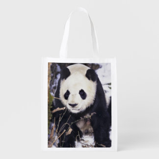 Asia, China, Sichuan Province. Giant Panda in 2 Grocery Bag