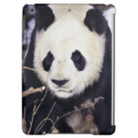 Asia, China, Sichuan Province. Giant Panda in 2 Cover For iPad Air