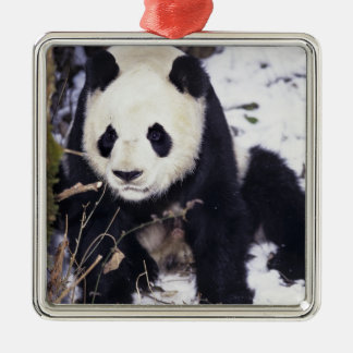 Asia, China, Sichuan Province. Giant Panda in 2 Metal Ornament